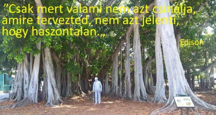Edison és a banyan tree (fügefa) életleckéje: a sikerhez vezető útról
