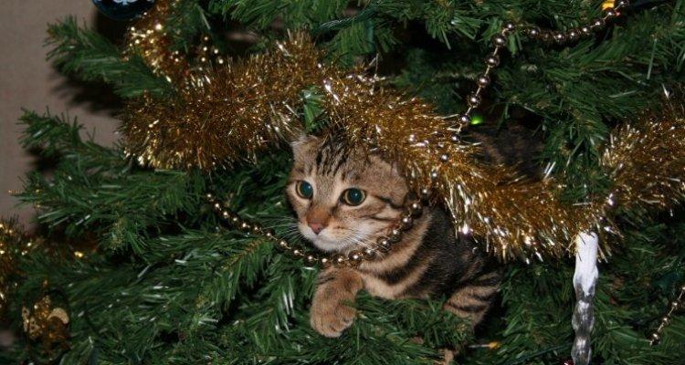 Az instant karácsony érzés előidézése